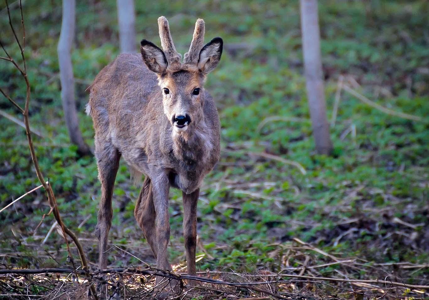animal-cervo-paesaggi-blog-finlandia