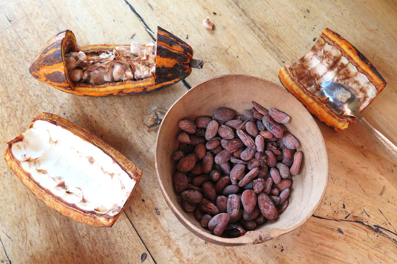 cacao-mondo-ecuador-zeppelin