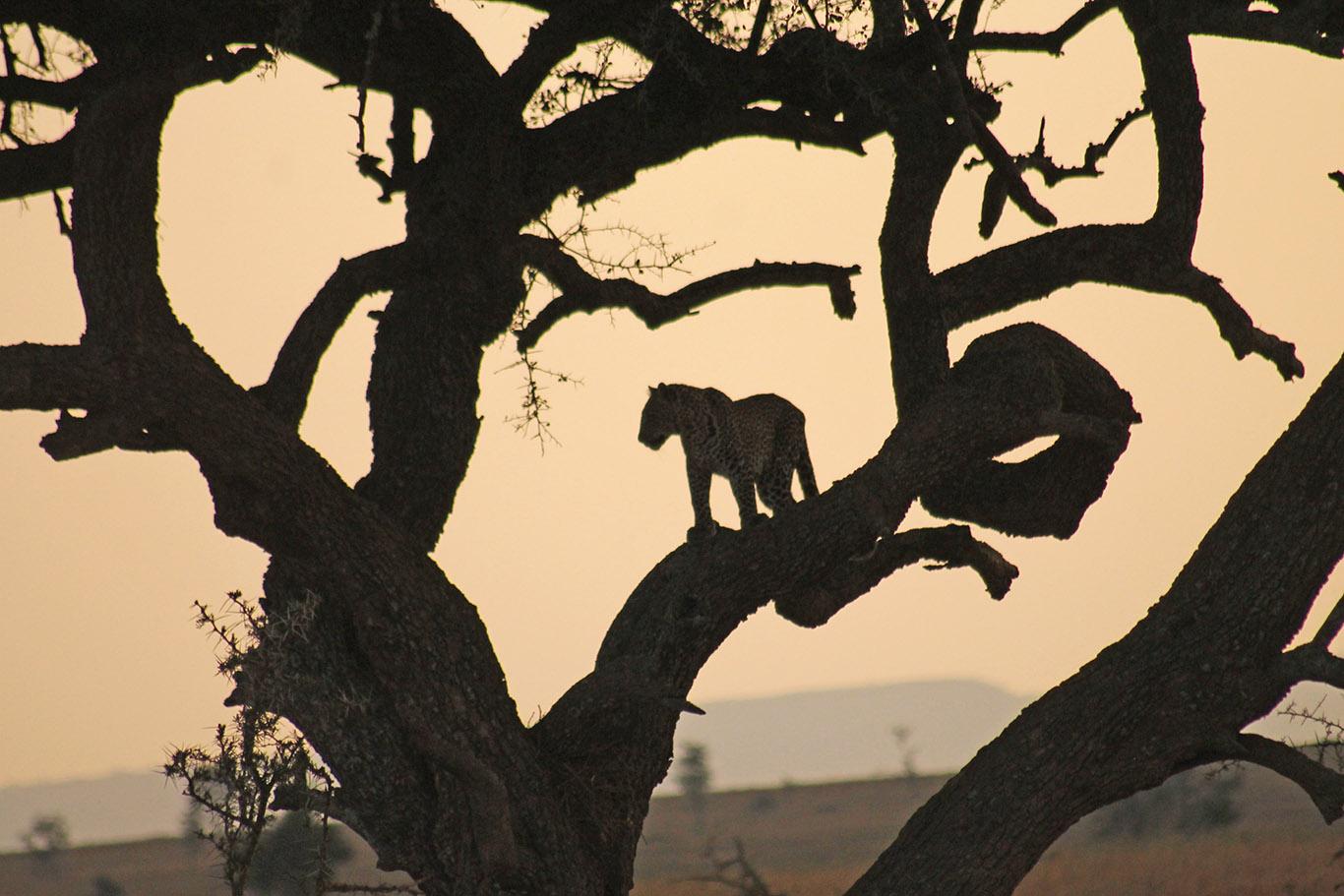 tanzania-albero-viaggio-nozze