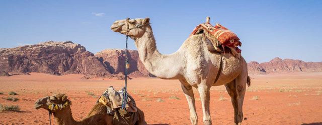 wadi-rum-cammelli-deserto-rosso-zeppelin