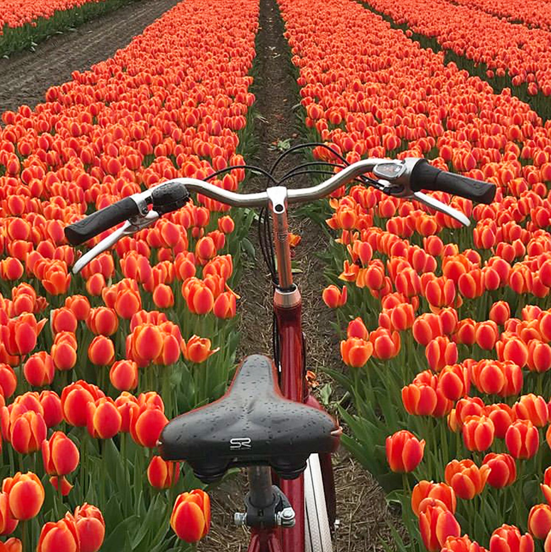 Concorso Instagram Girolibero foto tulipani